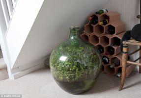 Bottle Garden 3