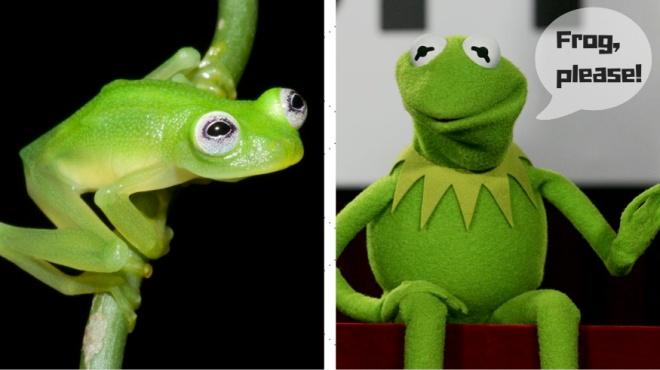 Frog,please!