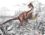 "CHICKEN FROM HELL Anzu wyliei is a bird like dinosaur that inhabited North American 66 million years ago. Because its relatives are chicken-size and the fossils were discovered at the Hell Creek Formation in South Dakota, A. wyliei received the nickname ""chicken from hell."" Its genus name, Anzu, derives from the feathered demon ""Anzû"" of Babylonian mythology. Illustration by Mark A. Klingler"
