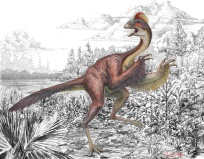 """CHICKEN FROM HELL Anzu wyliei is a bird like dinosaur that inhabited North American 66 million years ago. Because its relatives are chicken-size and the fossils were discovered at the Hell Creek Formation in South Dakota, A. wyliei received the nickname """"chicken from hell."""" Its genus name, Anzu, derives from the feathered demon """"Anzû"""" of Babylonian mythology. Illustration by Mark A. Klingler"""