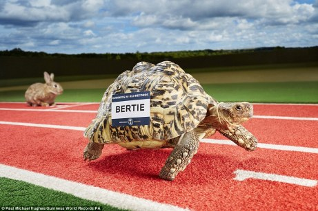 Bertie, a South African leopard tortoise, has raced his way into the records book by traveling 0.28 meters per second (0.6mph) in Durham - the greatest speed achieved by one of his kind - smashing the previous record that stood since 1977.