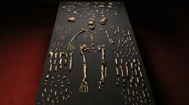 Pieces of a skeleton of Homo naledi, a newly discovered human species. Credit John Hawks/University of Wisconsin-Madison, via European Pressphoto Agency