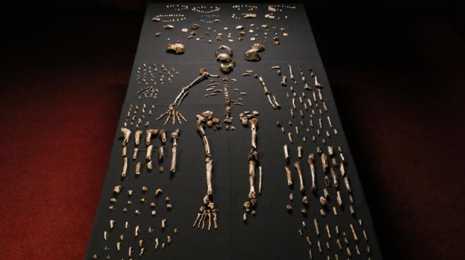 Pieces of a skeleton of Homo naledi, a newly discovered human species. Credit John Hawks/University of Wisconsin-Madison, via European Pressphoto Agency