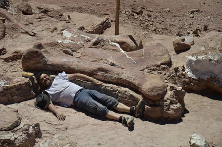 A team member is dwarfed by a bone of the gigantic dinosaur excavated in Patagonia. Photo: Courtesy of Dr. Alejandro Otero