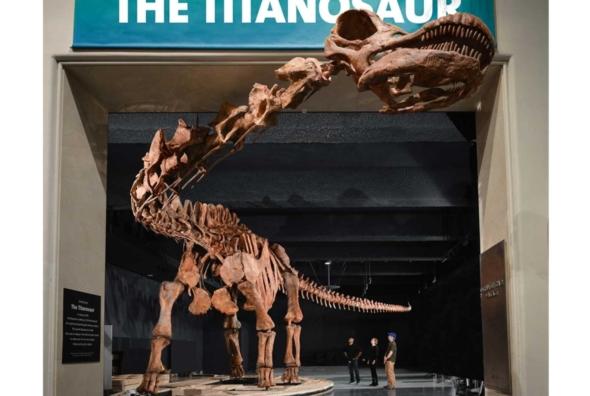 Titanosaur-Dinosaur